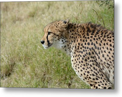 Metal Print featuring the photograph Spotted Beauty 3 by Fraida Gutovich