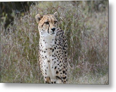 Metal Print featuring the photograph Spotted Beauty by Fraida Gutovich