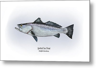 Spotted Sea Trout Metal Print by Ralph Martens