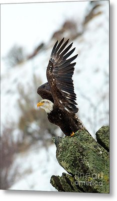Spread The Wings Metal Print by Mike Dawson