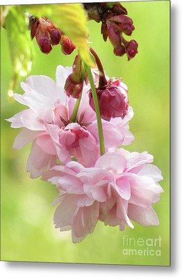 Spring Blossoms #8 Metal Print