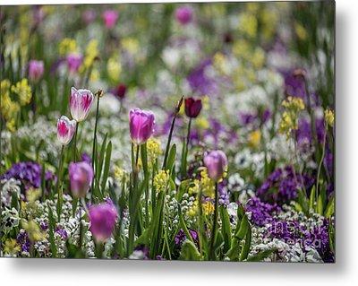 Spring Colors Metal Print by Eva Lechner