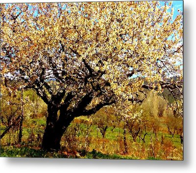 Metal Print featuring the photograph Spring Comes To The Old Cherry El Valle New Mexico by Anastasia Savage Ealy