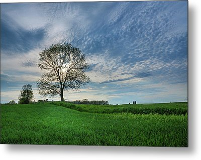 Metal Print featuring the photograph Spring Coming On by Bill Pevlor