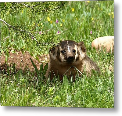 Spring Fever Metal Print by DeeLon Merritt