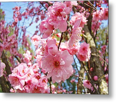 Spring Floral Art Prints Pink Tree Blossoms Metal Print by Baslee Troutman