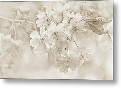 Metal Print featuring the photograph Spring Flower Blossoms Soft Brown by Jennie Marie Schell