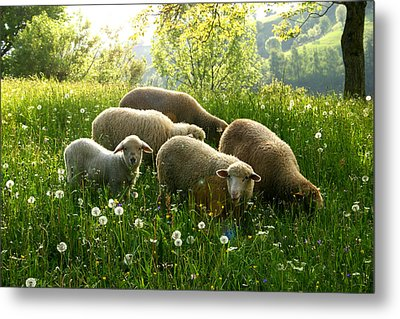 Spring In The Mountains Metal Print