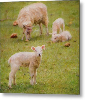 Metal Print featuring the photograph Spring Lamb by Bellesouth Studio