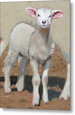 Spring Lamb Metal Print