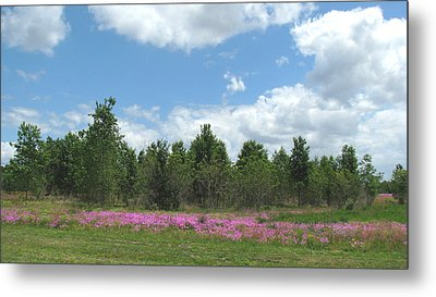 Metal Print featuring the photograph Spring Phlox by Peg Urban