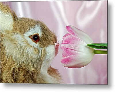 Spring Sniffer Metal Print by Maria Dryfhout