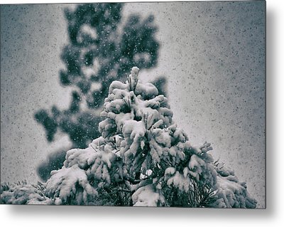 Spring Snowstorm On The Treetops Metal Print by Jason Coward