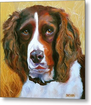 Springer Spaniel Metal Print by Susan A Becker