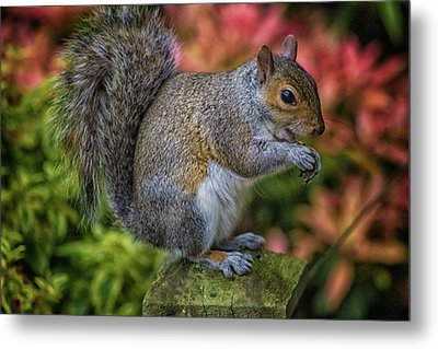 Squirrel Metal Print by Martin Newman