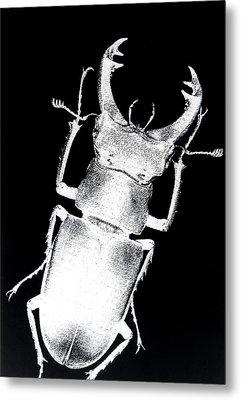 Stag Beetle Metal Print by Gabriela Insuratelu