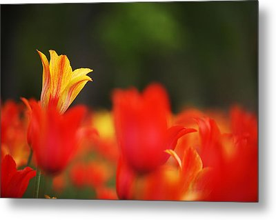 Stand Out In The Crowd Metal Print