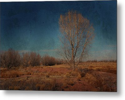 Metal Print featuring the photograph Standing Solo by Barbara Manis
