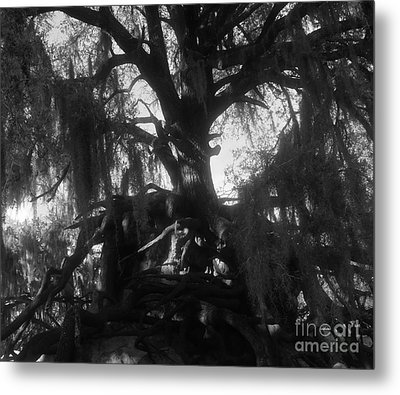Standing Tall Metal Print by David Lee Thompson