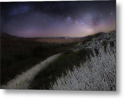 Metal Print featuring the photograph Star Flowers by Bill Wakeley