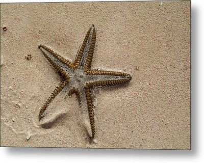 Starfish Partially Buried In White Sand Metal Print by Sami Sarkis