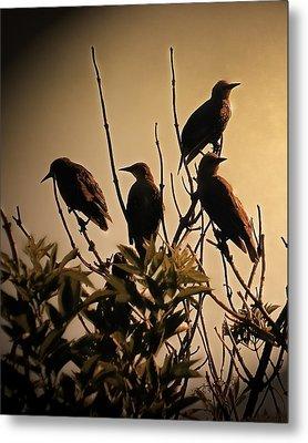 Starlings Metal Print by Sharon Lisa Clarke