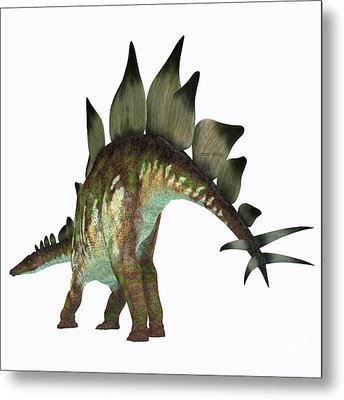 Stegosaurus Dinosaur Tail Metal Print by Corey Ford
