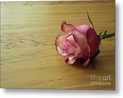 Still Life, Macro Photo Of Pink Rose Flower Metal Print by Pixelshoot Photography