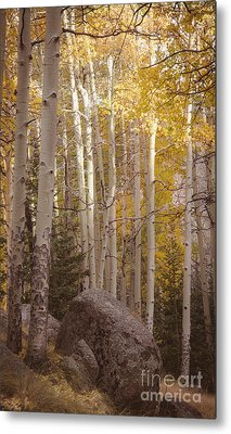 Metal Print featuring the photograph Stillness by The Forests Edge Photography - Diane Sandoval