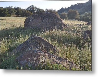 Stones In The Field Of Morning Metal Print