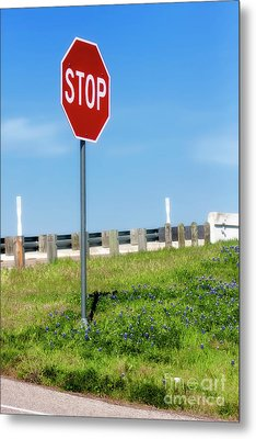 Stop For The Blue Bonnets Metal Print