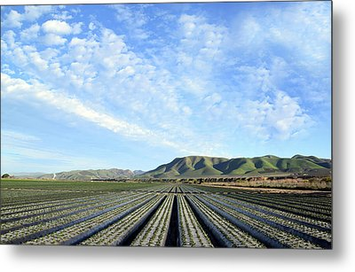 Metal Print featuring the photograph Strawberry Fields Forever 3 by Floyd Snyder