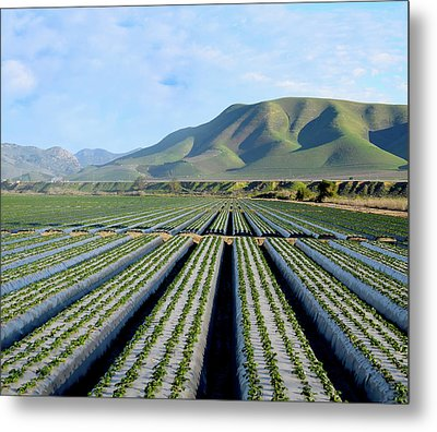 Metal Print featuring the photograph Strawberry Fields Forever by Floyd Snyder