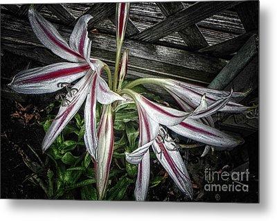 Striped Lilies Metal Print
