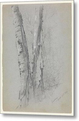 Study Of Birch Trunks Scribners' Metal Print