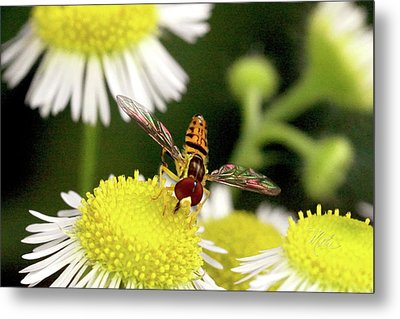 Sugar Bee Wings Metal Print by Meta Gatschenberger