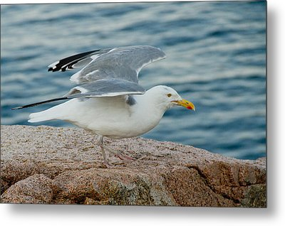 Summer Breeze Metal Print by Frank Pietlock