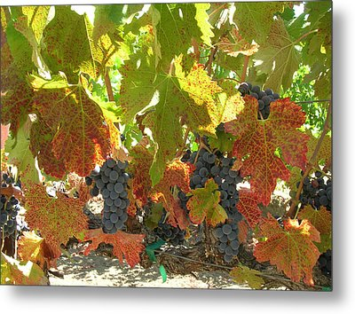 Summer Grapes Metal Print