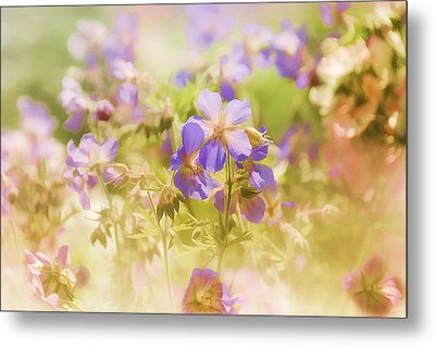 Summer Meadow Metal Print by Elaine Manley