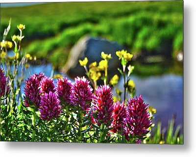 Metal Print featuring the photograph Summer Morning Blossoms by Marie Leslie