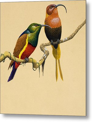 Sun Birds Metal Print by English School