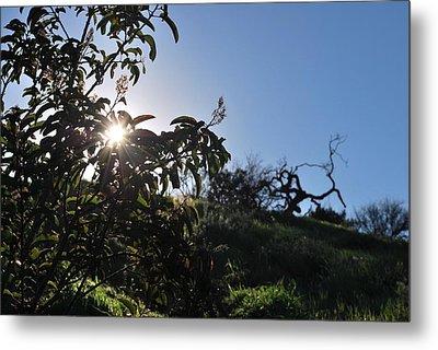 Metal Print featuring the photograph Sun Shines Through The Greenery by Matt Harang