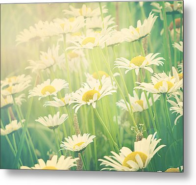 Sunday Morning Metal Print by Amy Tyler