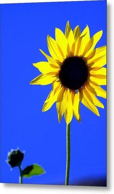 Sunflower 2 Metal Print by Marty Koch
