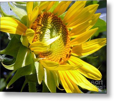 Sunflower No.35 Metal Print by Christine Belt