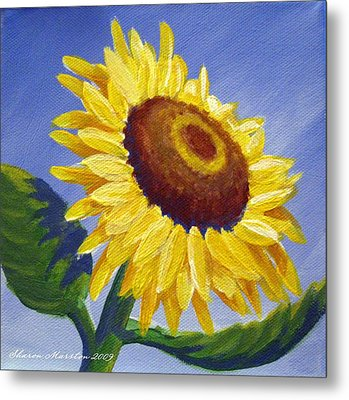 Sunflower Skies Metal Print by Sharon Marcella Marston