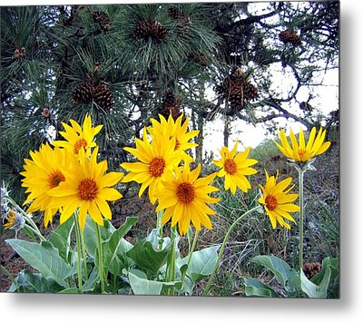 Sunflowers And Pine Cones Metal Print by Will Borden