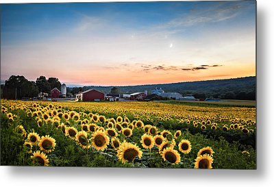 Metal Print featuring the photograph Sunflowers, Moon And Stars by Eduard Moldoveanu