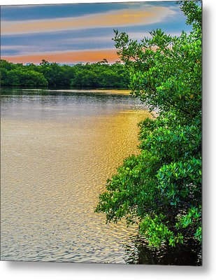 Metal Print featuring the photograph Sunlight On The Marsh by Steven Ainsworth