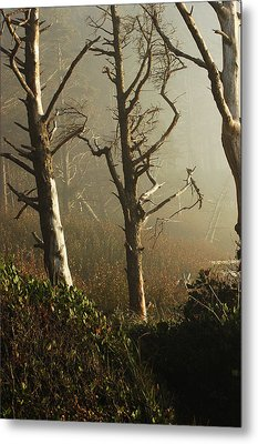 Sunlit Morning Metal Print by Lori Mellen-Pagliaro